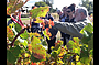 Barossa Valley via Hahndorf Wine Tour (Lunch & Wineries)