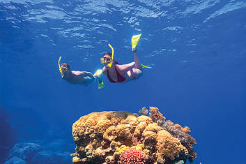 2 Day Reef & Rainforest Deluxe Package
