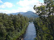 Huon Valley and Tree Tops Walk (Full Day)