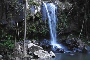 Curtis Falls at Mt Tamborine