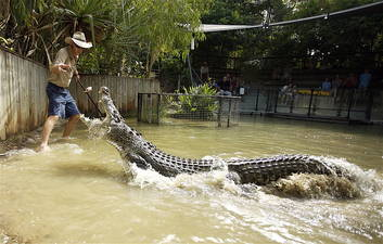 Crocodile Attack Show
