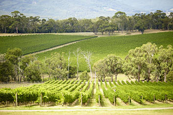 Discover The Yarra Valley Wineries