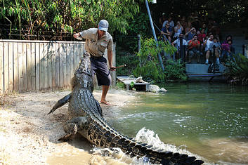 Hartleys Crocodile Adventures with Palm Cove transfers