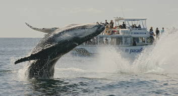 Whale Watching & Canal Cruise with transfers from Brisbane