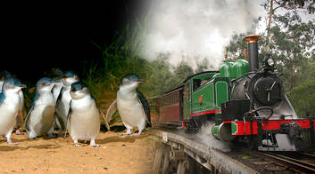 Puffing Billy and Penguins