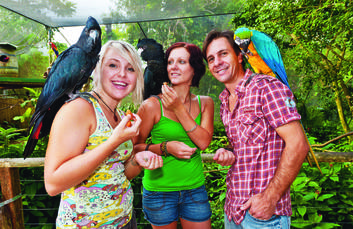 Feeding opportunities at Birdworld Kuranda
